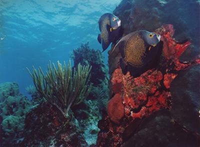 Reef Diving in Cancun